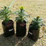 Nursery Planter Bags