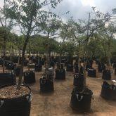 150L Polywoven Tree Bags